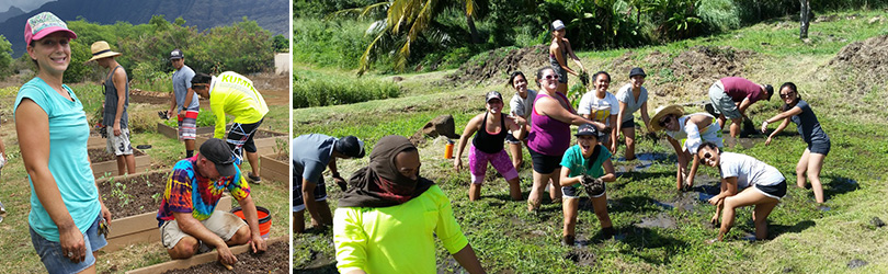 Images of UH West Oahu Service Learning students working a taro patch or lo'i on the west side of Oahu.