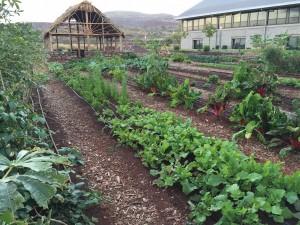 UH West Oʻahu Student Organic Campus Garden