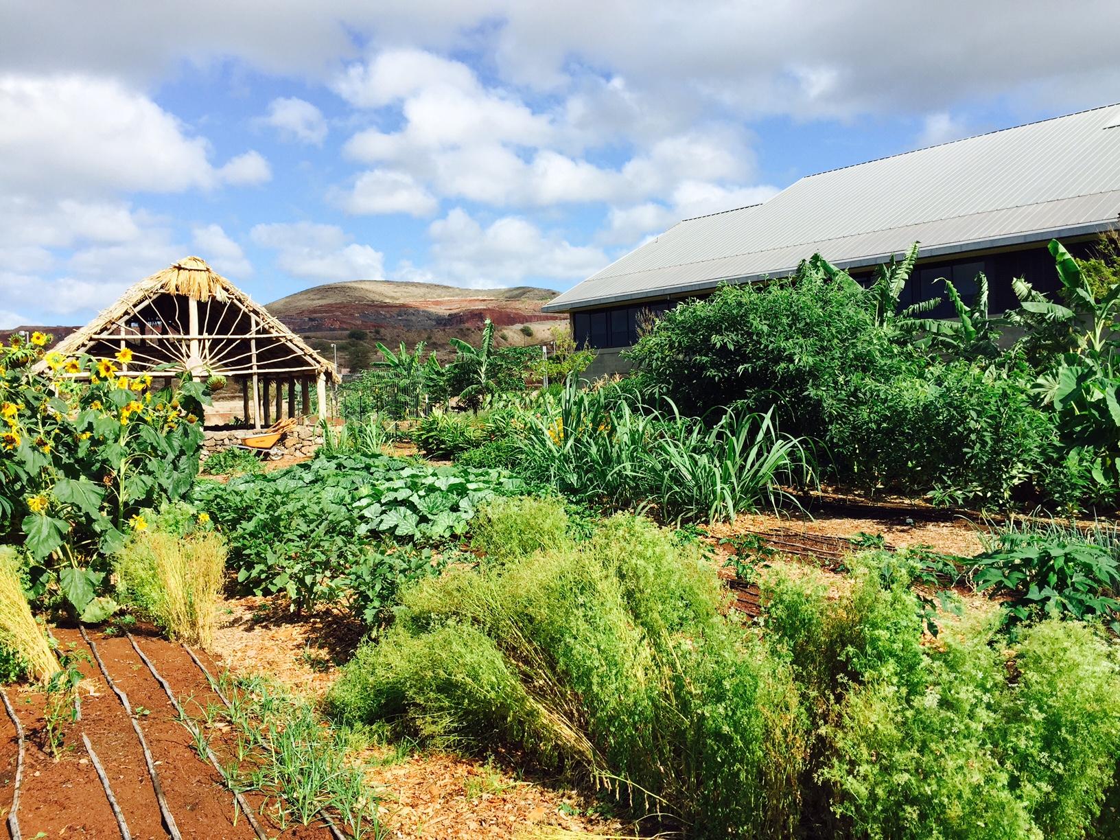 UHWO Student Organic Garden