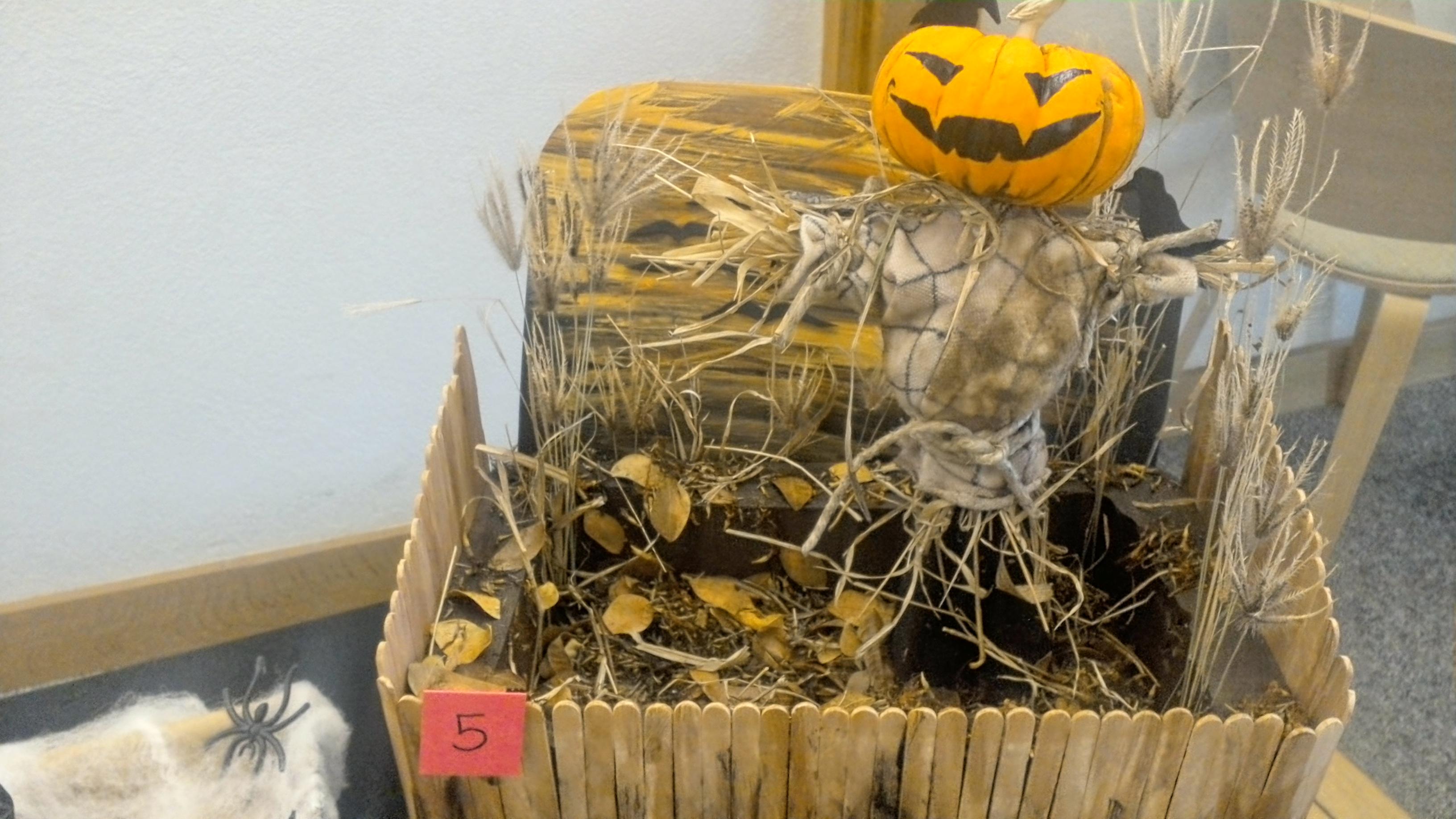 Pumpkin contest 1