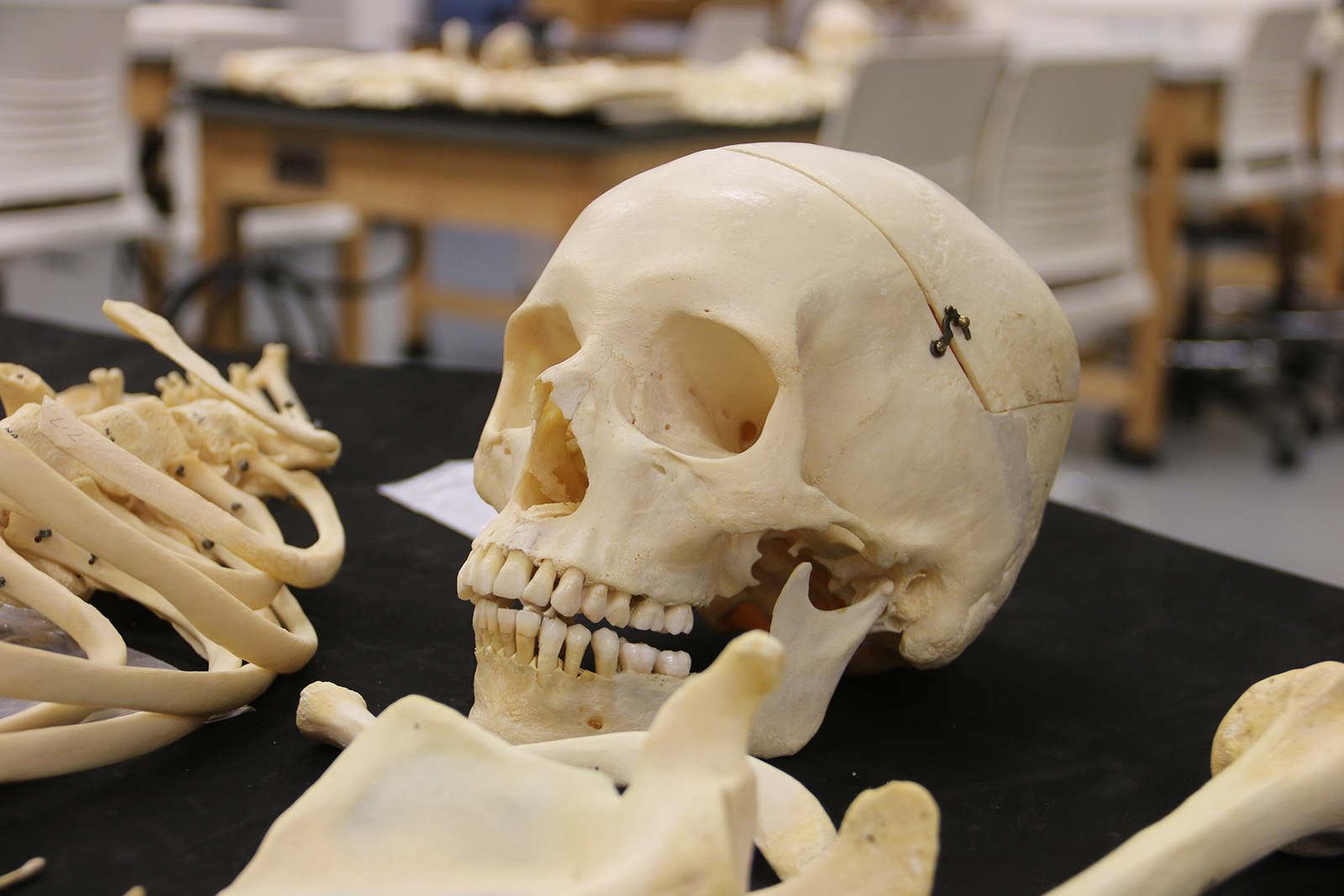 E Kamakani Hou Tag Certificate In Applied Forensic Anthropology