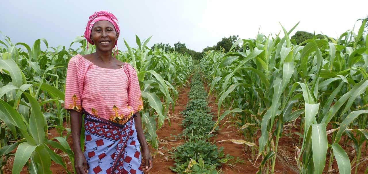 Tanzanian farmer intercropping grains with legumes.