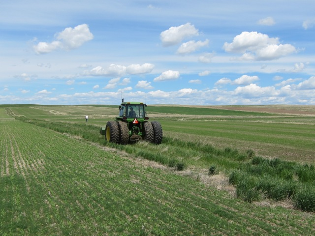 At Vilicus Farms, north of Havre, Montana, Doug Crabtree and Anna Jones-Crabtree rotate 24 different crops in 36 foot strips, with pollinator-friendly border plantings in between.