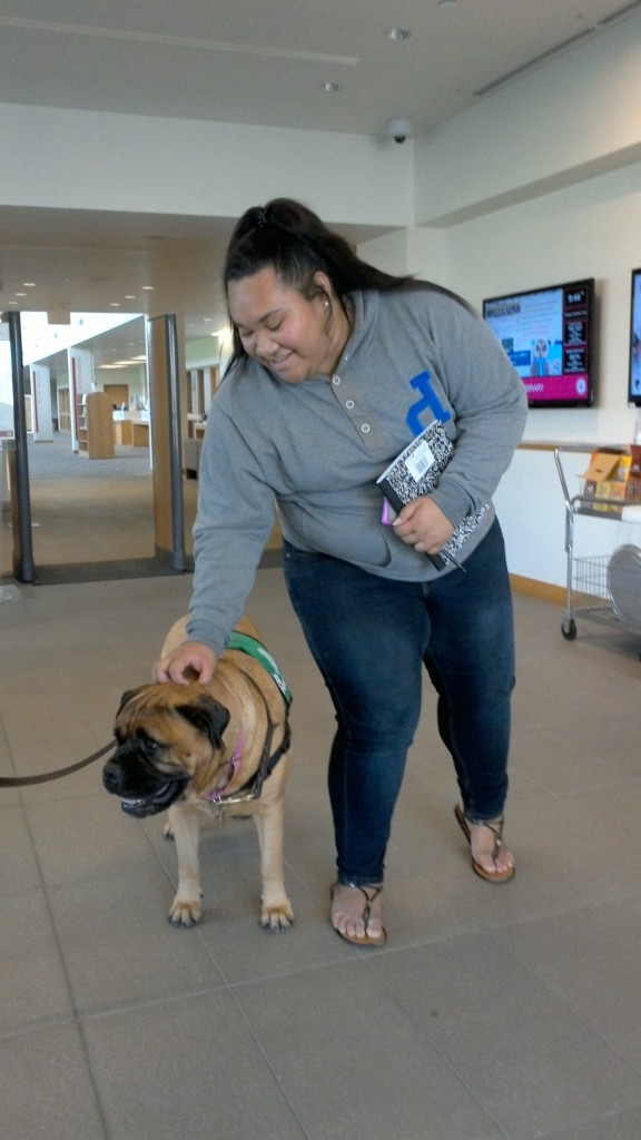 """A UH West Oʻahu student pauses to pet Hawaiian Humane Society companion Madra at the UH West Oʻahu Library's """"Paws for Coffee"""" event in fall 2015."""