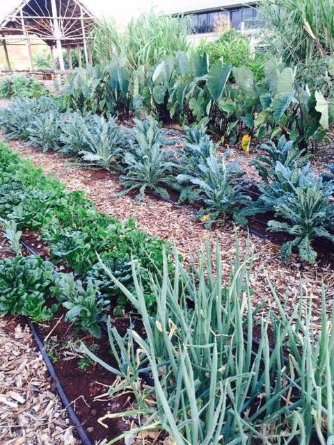 UHWO garden