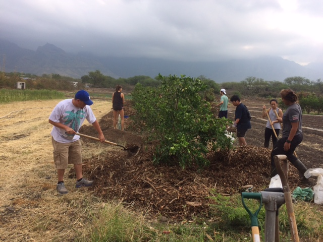Students performing service learning work at MAʻO Organic Farms.