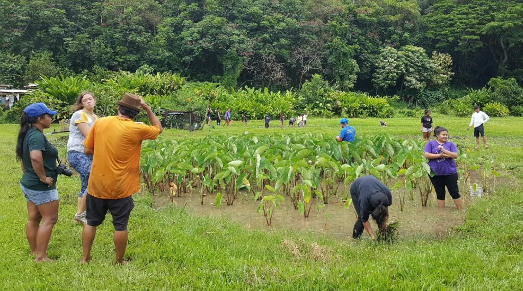 photo of UHWO Sustainable Community Food Systems students in the field