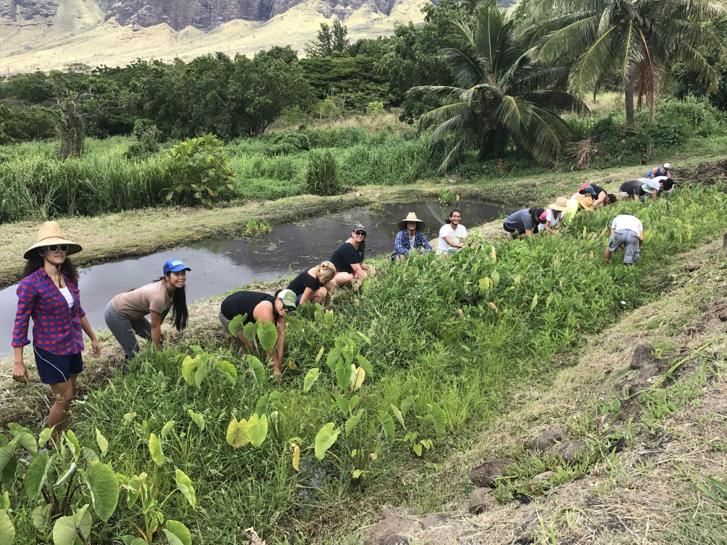 Photo of Politics of Water students working at Ka'ala Farm