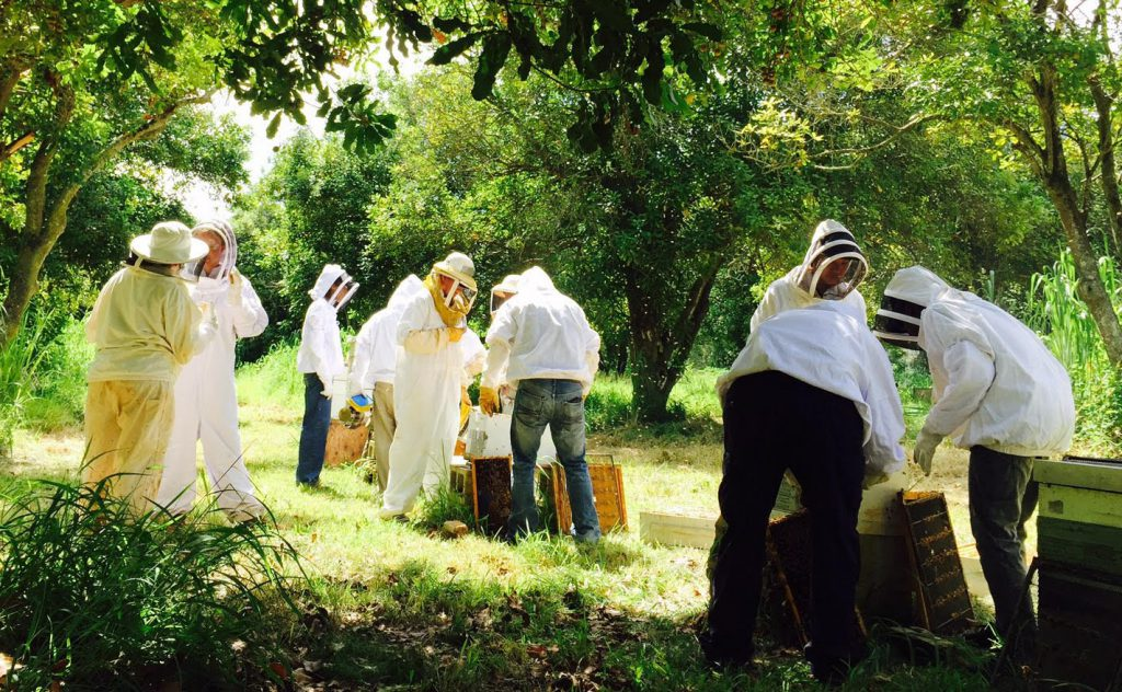 UH West Oahu students working with bee hives