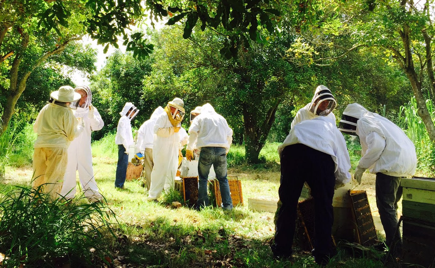 UH West Oahu students working with beehives