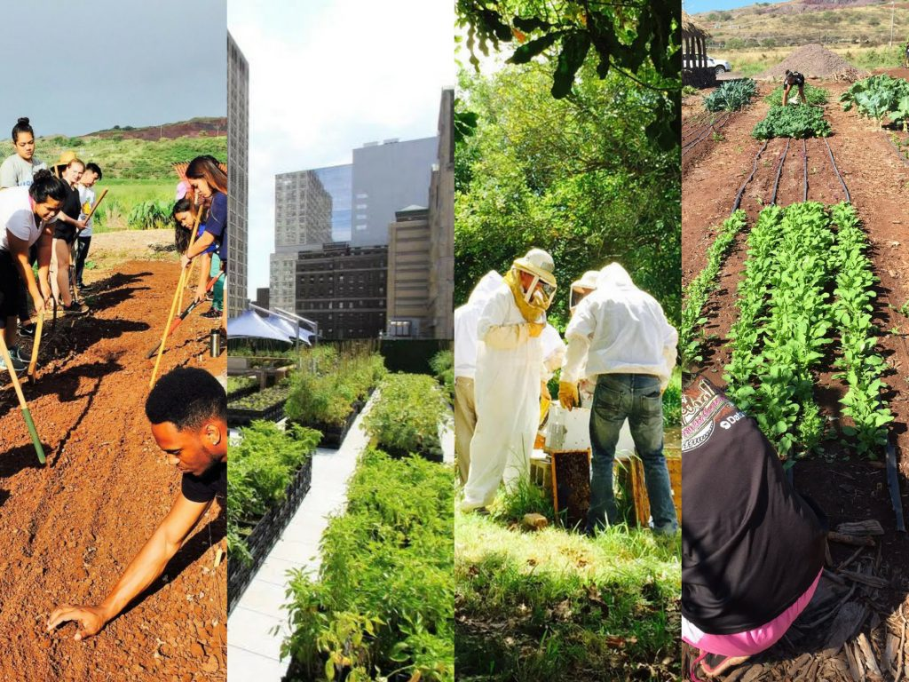 four photos of students working in organic garden, an urban rooftop garden and beekeepers