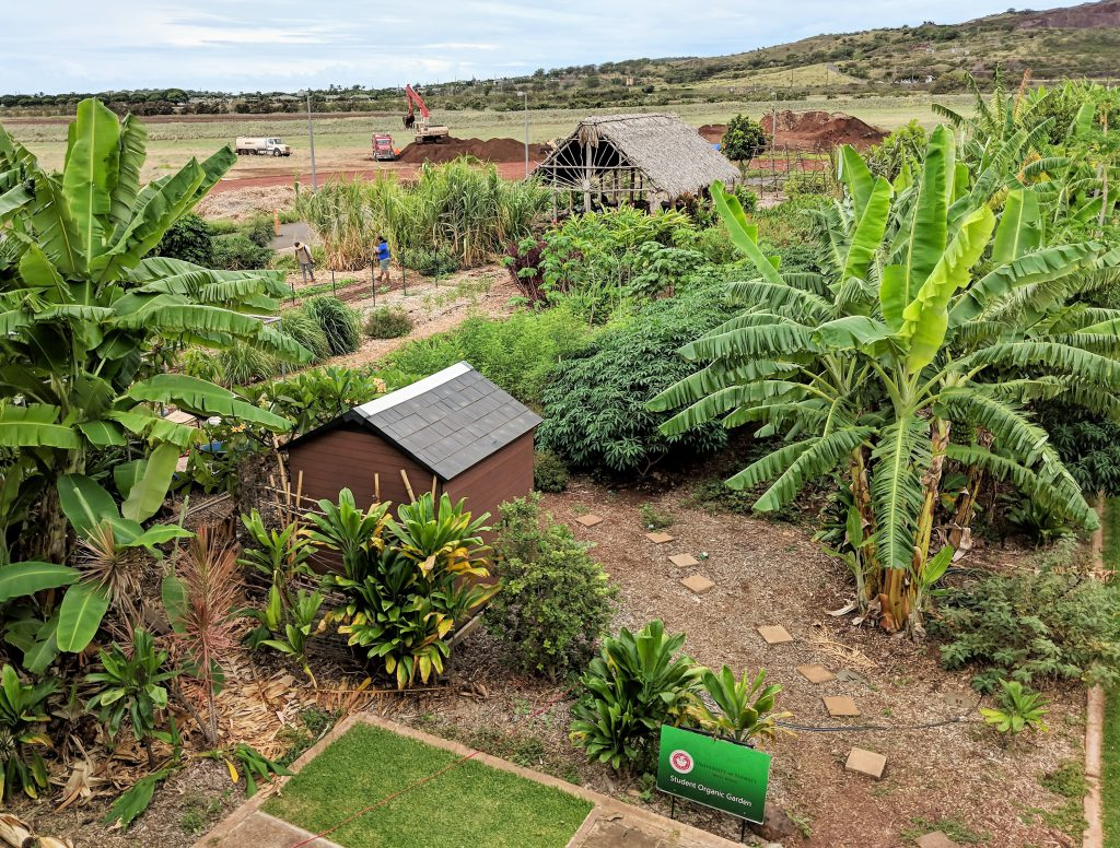 Photo looking down on a garden filled with banana plants, other growth and a hale
