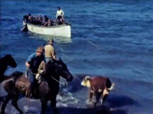frame grab of a cow running into the water. Two cowboy and a boat are in the picture