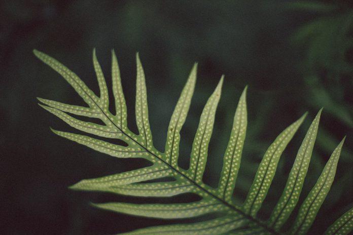Closeup of a leaf.