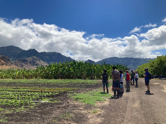 People looking at crops in a farm.