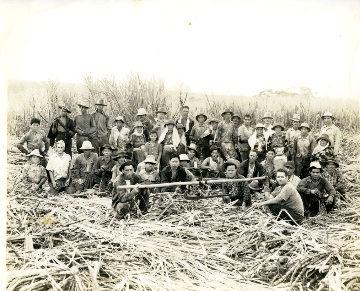 Image of plantation workers