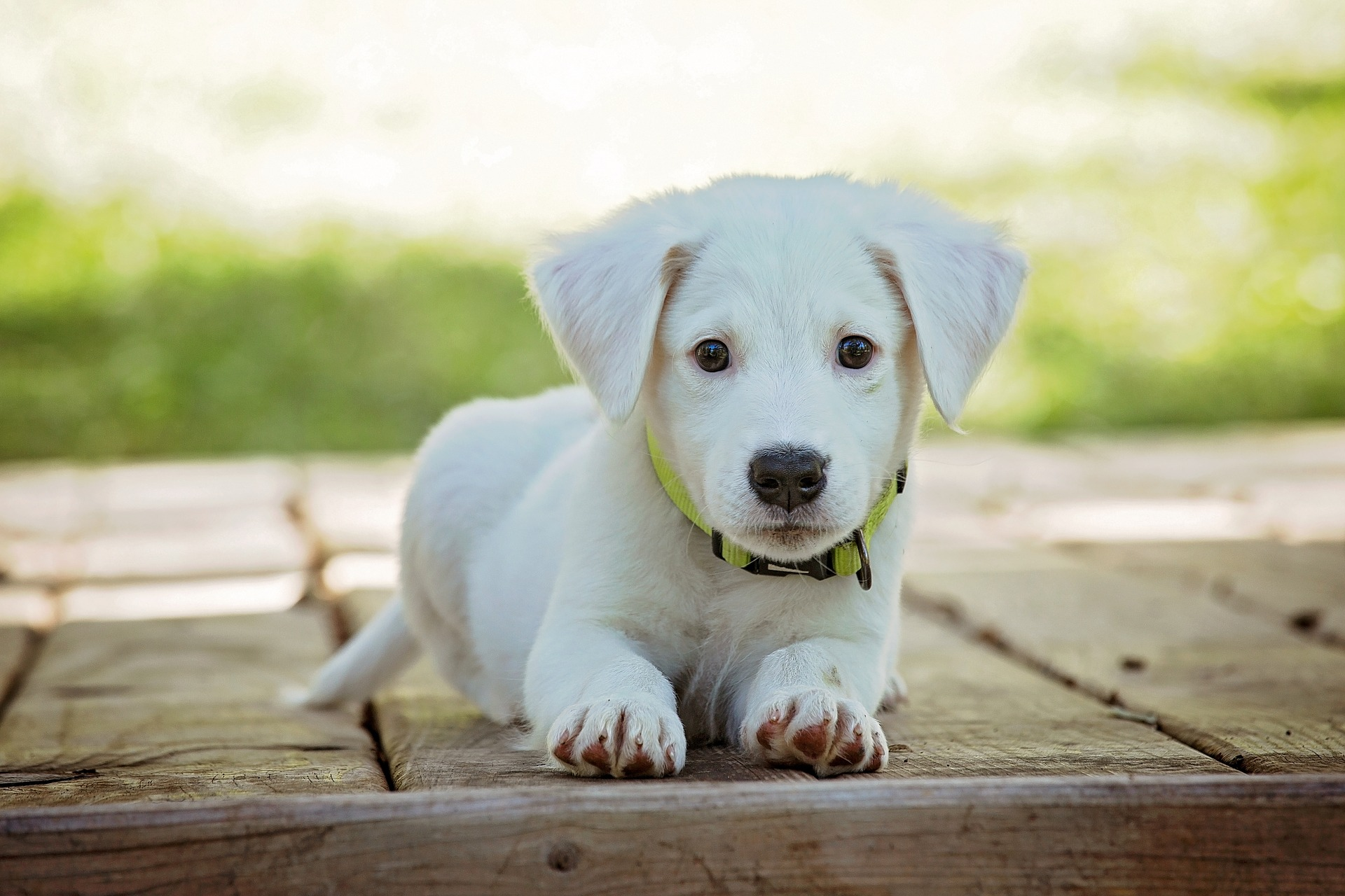 A picture of a white puppy laying on the sidewalk
