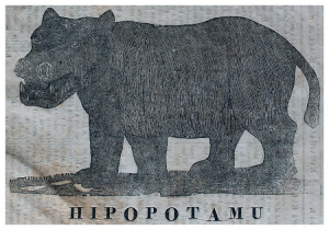 A picture of a hippopotamus that was featured in Ka Lama Hawaii.