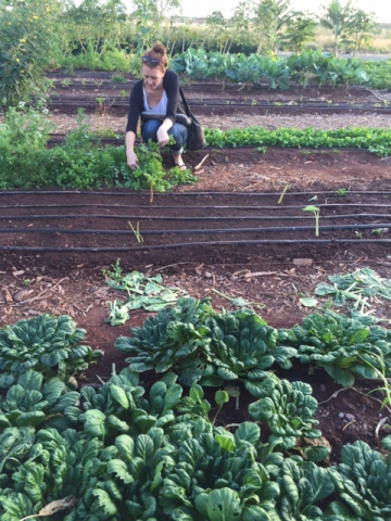 Student crouches down to inspect the green herbs growing in a planting row