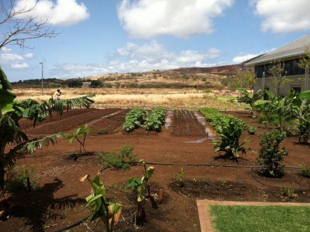 A couple of planting rows with various green growing towards the back end of the garden.