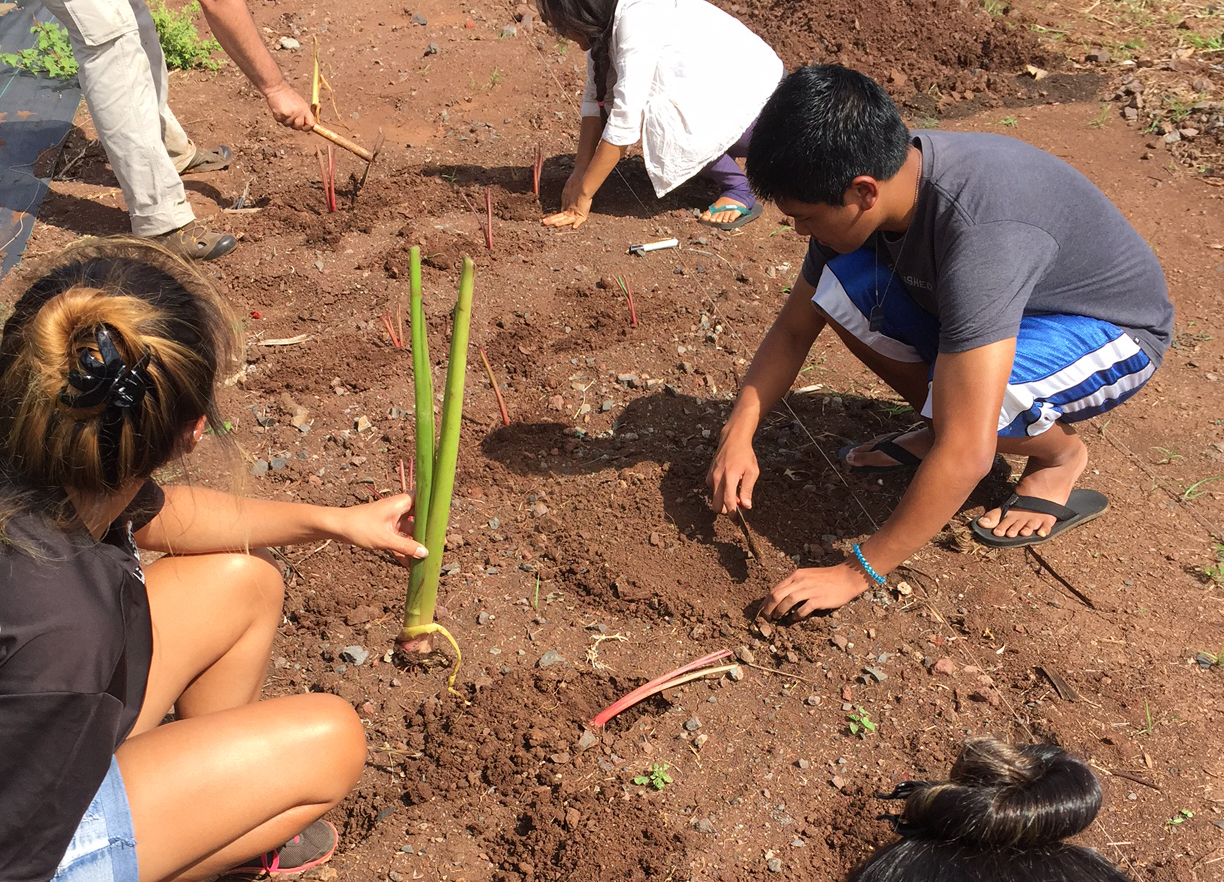 Students planting seedlings in the campus mala.