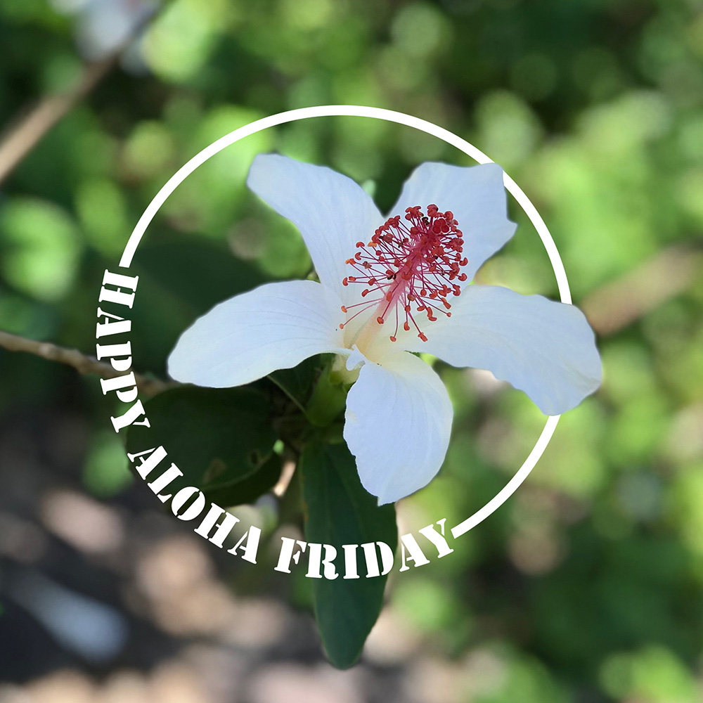 A White Hibiscus With The Words Happy Aloha Friday In The Foreground.