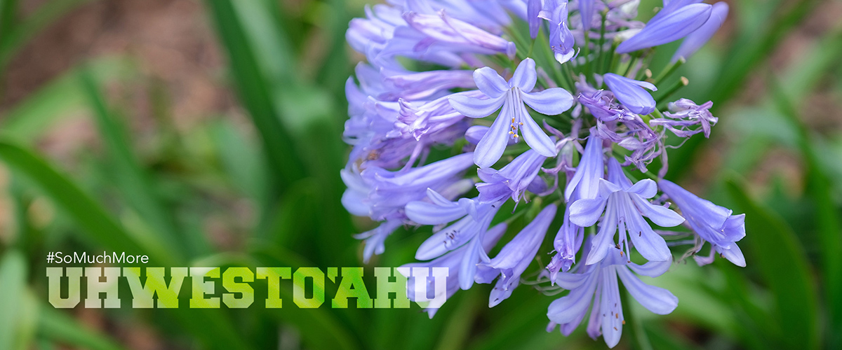 A Violet Colored Flower In The Mala.
